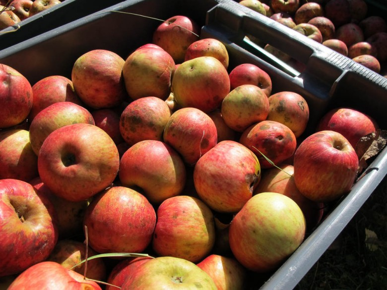 Recipes to use apples